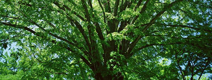 無垢の木と自然素材にこだわるのは当然のこと